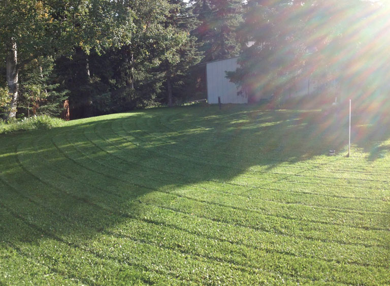 Lawn Care For Beginners 3 Surefire Ways To Better Your Yard